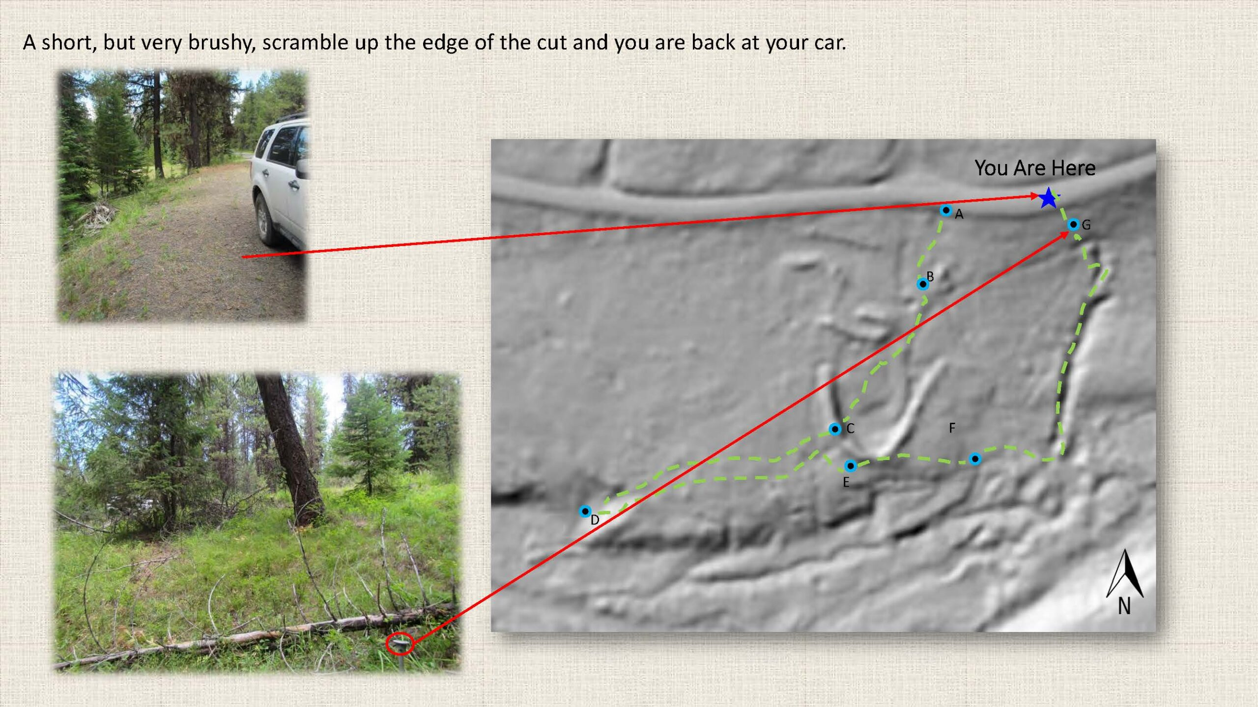 A short, but very brushy, scramble up the edge of the cut and you are back at your car.